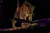 Цирк «Вива, Зорро!» в Туле , Фото: 16