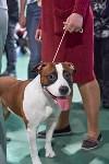 Выставка собак в Туле 26.01, Фото: 37