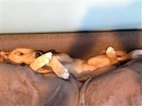 Кошки и собаки, проигравшие битву с мебелью, Фото: 10