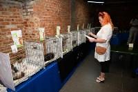 Выставка кошек в Искре, Фото: 39