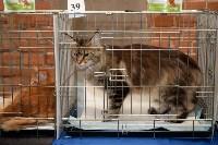 Выставка кошек в Искре, Фото: 37