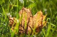 Золотая осень в Тульской области, Фото: 77