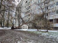 В Туле упавшее на девятиэтажку дерево повредило несколько балконов, Фото: 12