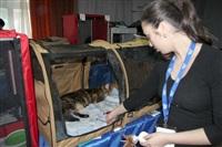 В Туле прошла международная выставка кошек, Фото: 16