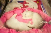 """Выставка """"Пряничные кошки"""". 15-16 августа 2015 года., Фото: 148"""