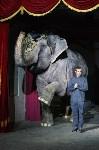 """Пресс-конференция """"Шоу слонов"""", Фото: 33"""