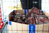 Благотворительный фестиваль помощи животным, Фото: 17