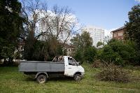 Мне нужнее: в тульском дворе подрядчик самовольно вырубил 15 ясеней и забрал их себе, Фото: 16