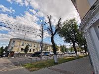 В Туле гибнут деревья, Фото: 24