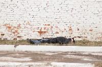 Выездное заседание Коллегии УМВД России по Тульской области, Фото: 32
