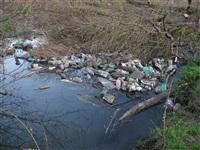 Спиленные деревья в ручье березовой рощи, Фото: 8