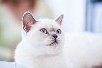"""Выставка """"Пряничные кошки"""". 15-16 августа 2015 года., Фото: 49"""