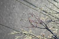 Апрельский снегопад - 2021, Фото: 17