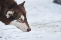 Праздник северных собак на Куликовом поле , Фото: 46