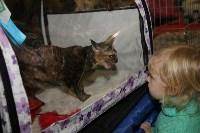 Выставка кошек. 21.12.2014, Фото: 39