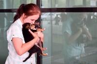 В тульском «Макси» прошел благотворительный фестиваль помощи животным, Фото: 38