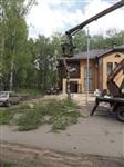 """У ресторана """"Пафос"""" срубили шесть здоровых берез, Фото: 2"""