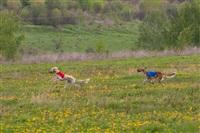 В Туле состоялись собачьи бега, Фото: 41
