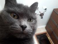 Тульские коты, которых достали хозяева на самоизоляции, Фото: 27