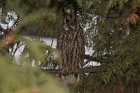 В Привокзальном районе поселились ушастые совы, Фото: 6