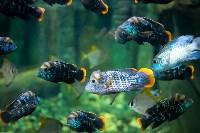Тульский экзотариум: животные, Фото: 21