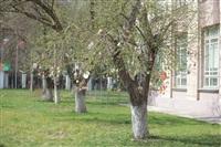 Тульское пасхальное чудо-дерево, Фото: 8