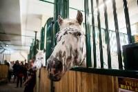 Цирк Гии Эрадзе в Туле, Фото: 14