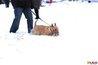 Куликово поле. Гонки на собачьих упряжках., Фото: 21