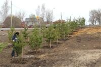 Высадка деревьев в Мясново, 4 апреля 2014 г., Фото: 2