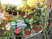 Магазин цветов, ИП Панова В.Е. , Фото: 4