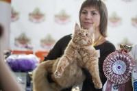 В Туле прошла выставка «Пряничные кошки» , Фото: 54