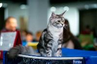 Пряничные кошки, Фото: 18