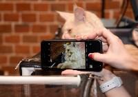 Выставка кошек в Искре, Фото: 79
