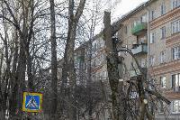 Кронирование деревьев в Туле: что можно, а чего нельзя?, Фото: 8