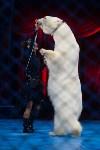 Тульский цирк, Фото: 96