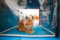 Международная выставка кошек. 16-17 апреля 2016 года, Фото: 41