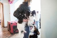 Выставка собак в Туле, 29.11.2015, Фото: 47