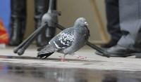 Птицы в городе-2015, Фото: 5