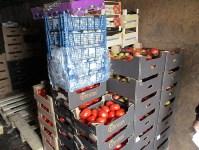 В Туле обнаружили почти 3 тонны санкционных овощей и фруктов, Фото: 1