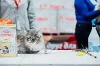 """Выставка """"Пряничные кошки"""" в ТРЦ """"Макси"""", Фото: 46"""