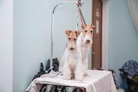 Всероссийская выставка собак 2017, Фото: 55