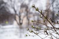 Мартовский снег в Туле, Фото: 97