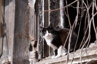 Тульские котики, Фото: 32