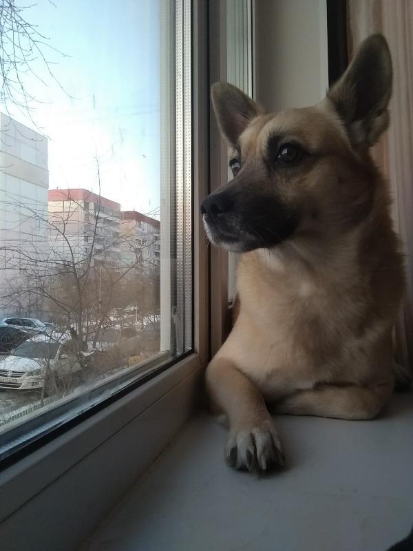 Пёс любуется видами)