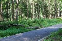 В Баташевском саду из-за непогоды упали вековые деревья, Фото: 7