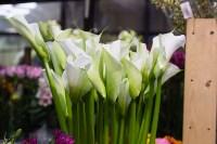 Ассортимент тульских цветочных магазинов. 28.02.2015, Фото: 44