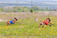 В Туле состоялись собачьи бега, Фото: 37
