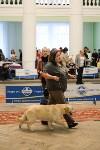 """Выставки собак в ДК """"Косогорец"""", Фото: 38"""