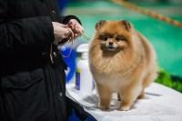 Выставка собак в Туле, Фото: 10