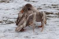 Масленица на берегу Упы, Фото: 67